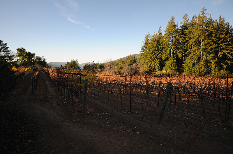 WS_vineyards